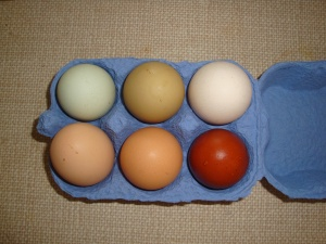 An egg of every colour - don't put them all in one basket!