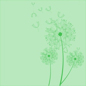 dandelion-flowers-green-background